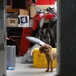 隣のお犬さん。